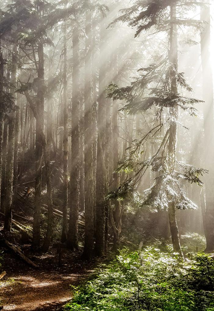 faq-forest